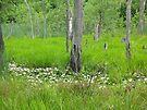 Blooming Swamp by Chelsea Kerwath