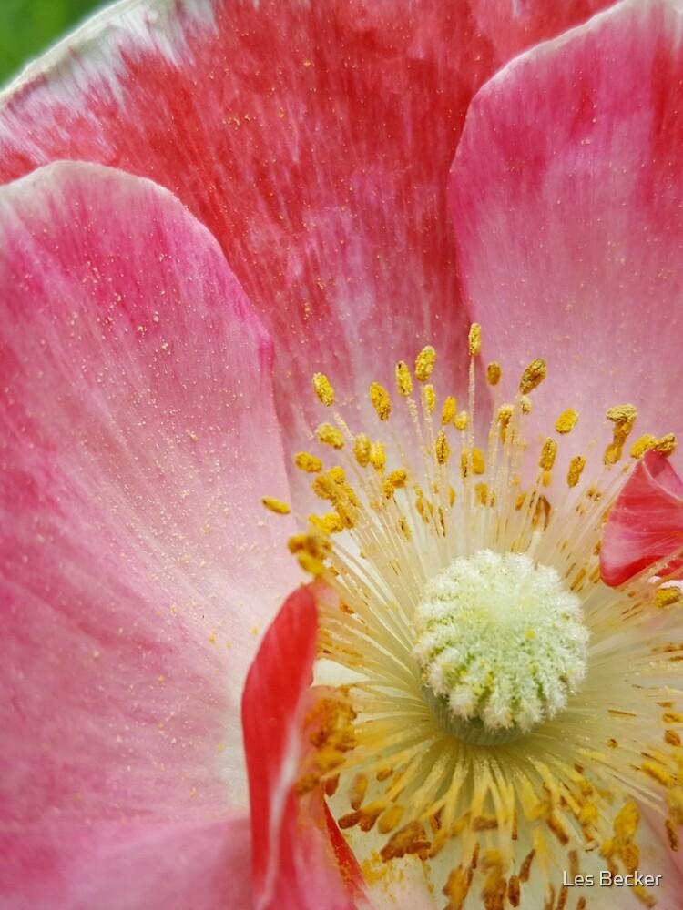 Poppy by lesbecker