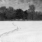 Winter Woodland in Mono by Mark Dobson