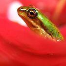 Tiny froglet by Belinda Cottee