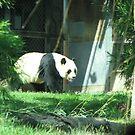 Panda Bear by iagomega