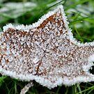 The frozen star by Darren Bailey LRPS