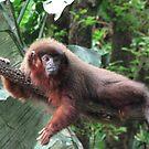 Monkey by iagomega