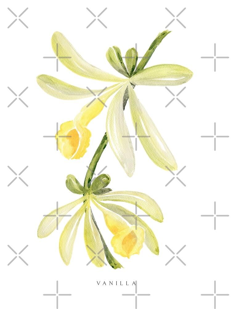 Watercolor vanilla orchid illustration by blursbyai