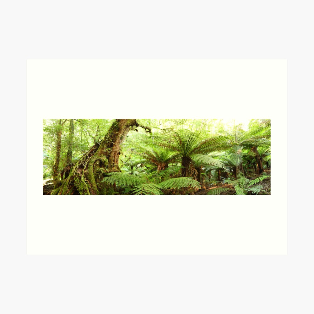 Myrtle Tree, Tarra Bulga National Park, Australia Art Print