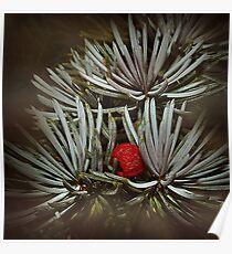 Nestling Winterberry Poster