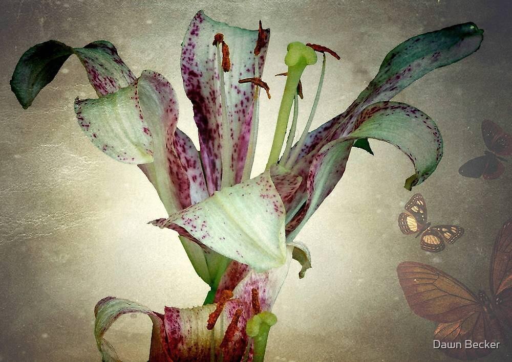 Purple lily ©  by Dawn Becker