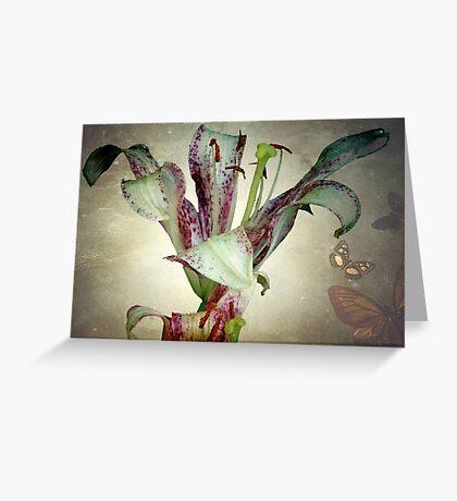 Purple lily ©  Greeting Card