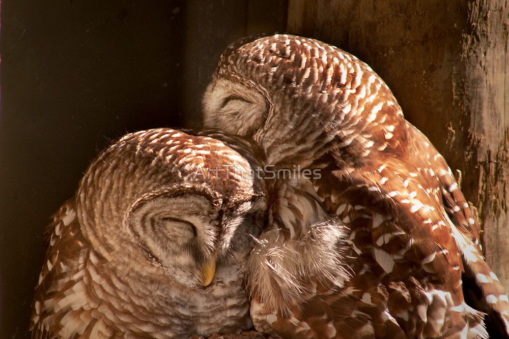 """""""In CoHoots"""" Two Barred Owls Snuggling by ArtThatSmiles"""