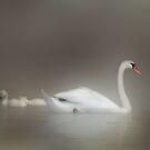 Dreamy White Enchantment by enchantedImages