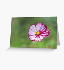 Cosmos Flower Greeting Card