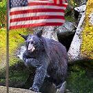 Patriotic Black Bear by Alex Preiss