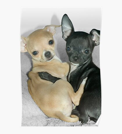 """""""Chummy Chihuahuas"""" - Looks like Puppy Love Poster"""