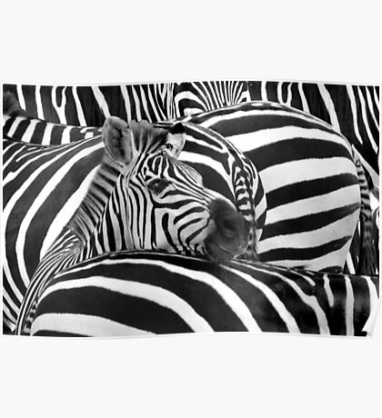 """""""Stripes"""" - Optical Illusion of the stripes on the zebras Poster"""