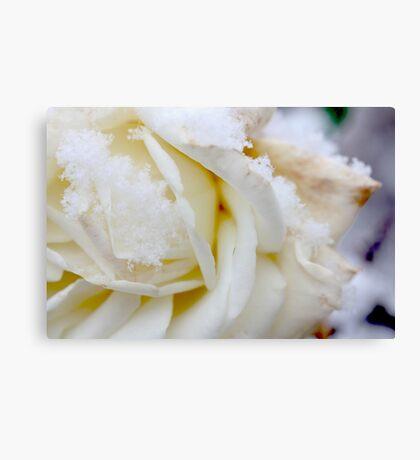 white winter Canvas Print