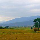 Kiewa Valley, Victoria. by johnrf