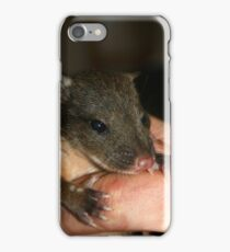 Hand Raised Spotted Tail Quoll iPhone Case/Skin