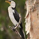 Perfect perch by Steve Bullock
