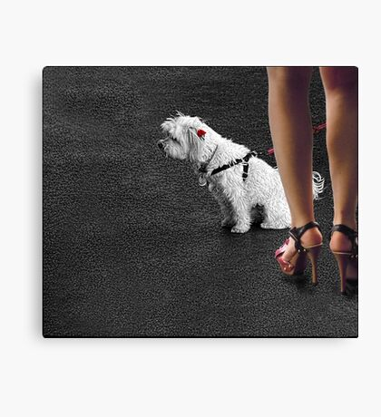 dogged attention Canvas Print