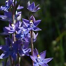 Wildflowers of Victoria by Jay Armstrong