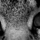 Eye of the Tiger by Birgit Schnapp