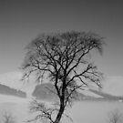 winter tree by Mitch  McFarlane