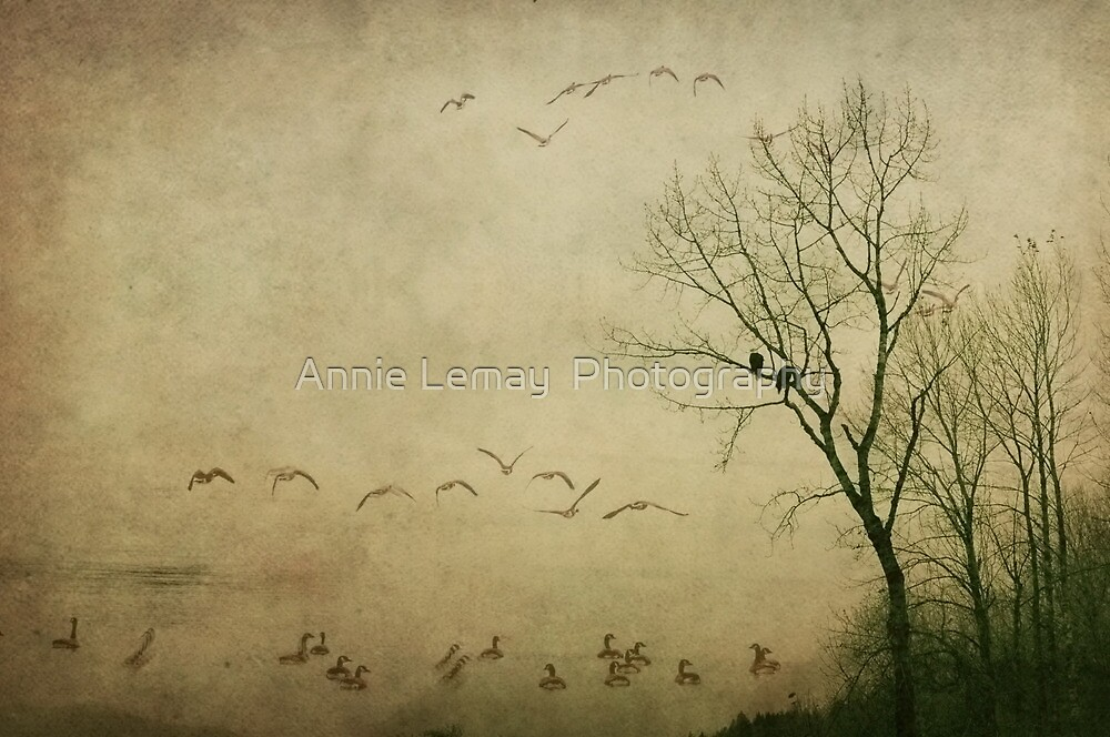 Serenity by Annie Lemay  Photography