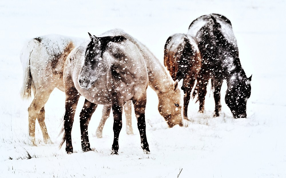 All Covered In Snow  by Jeanne  Nations