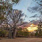 Creative Collection - Kimberley Boab Tree at Sunset by coastal-west