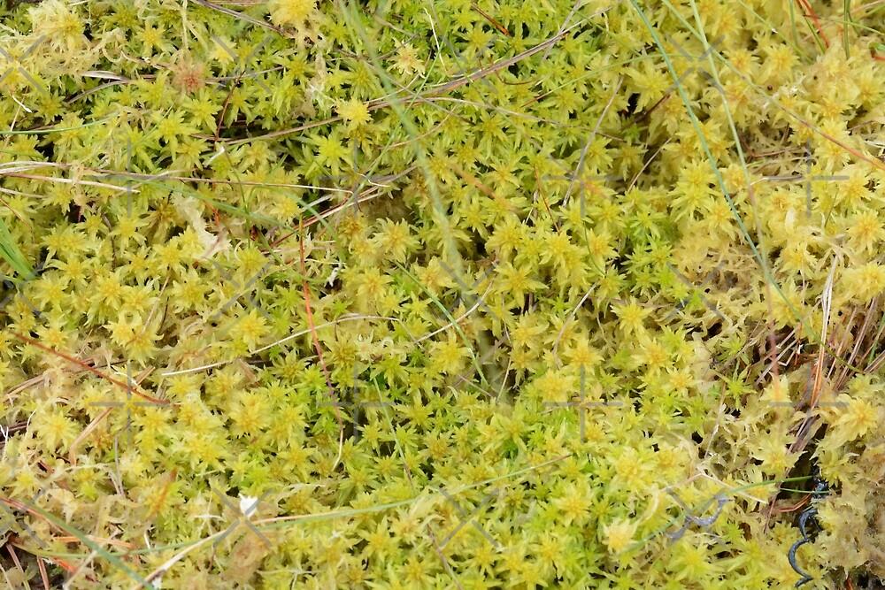 A Bed of Sphagnum Moss by SiobhanFraser