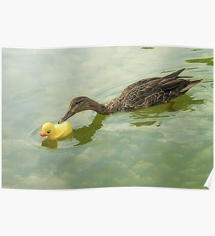 """""""Adopted?"""" - A real duck looks into adopting a rubber duckie Poster"""