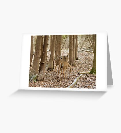 Encounter in the woods Greeting Card