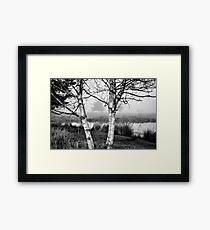 Late November Birches Framed Print