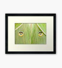 "Luna Moth close-up...""The Stare"" Framed Print"