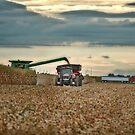 Harvesting on the Go by Steve Baird