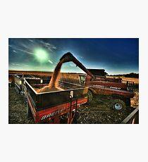 Golden Harvest Photographic Print