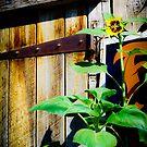 The Old Barn Doors by Jeanne Sheridan