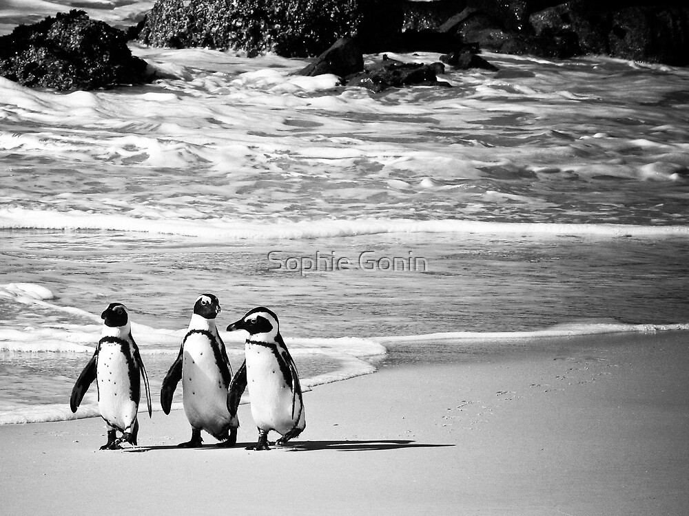 The Three Amigos by Sophie Gonin
