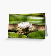 Amazonian Water Lily Greeting Card