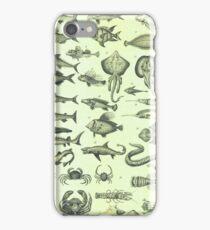 Vintage Sealife Nautical Chart iPhone Case/Skin