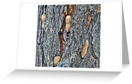 The Rarely Seen Nutree by Lenny La Rue, IPA