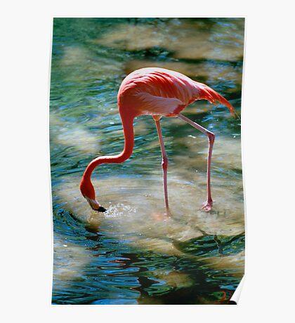 """Flamingo Drink"" - Flamingo gets a drink Poster"