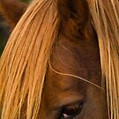 """""""The Mane Thing"""" - closeup of a wild horse by ArtThatSmiles"""