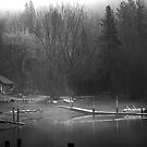 Eagle in the mist by Steve Biederman