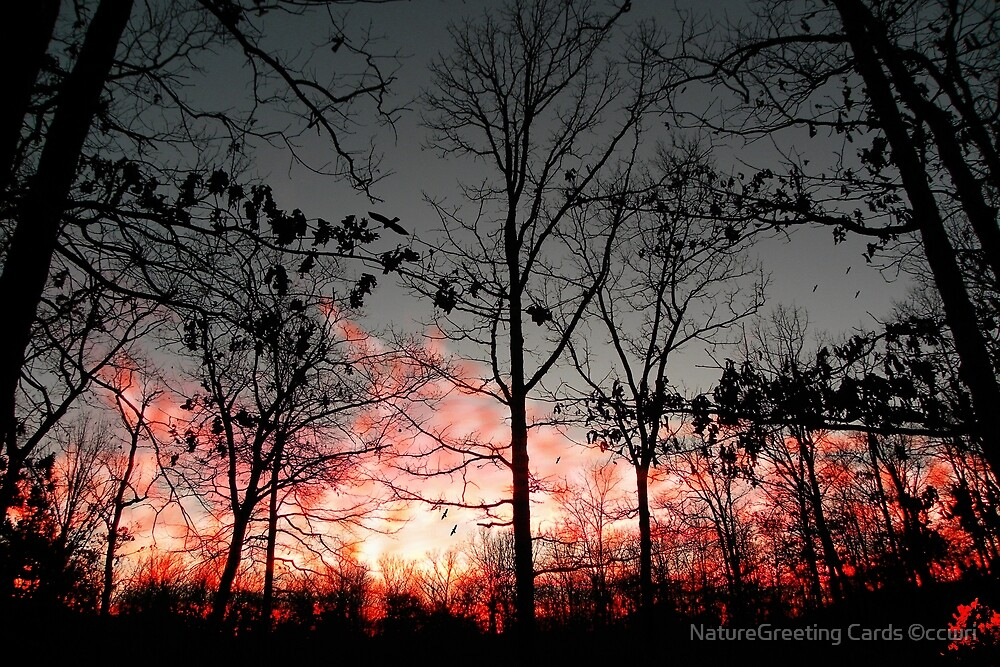 Relaxing By The Evening Fire by NatureGreeting Cards ©ccwri