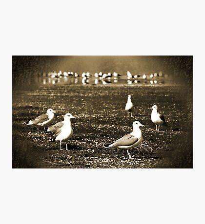 Lake Vacation: Great-Grandpa Seagull Family Portrait  Photographic Print