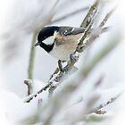Winter Coal Tit by Sarah-fiona Helme