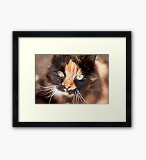 Furry Bokeh Framed Print