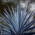 Plantlife by Kym Howard
