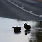 Sums up the day.................... by Dave  Hartley